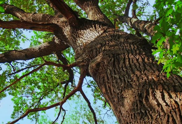 Tri-County Tree Service image 0