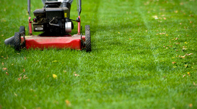 Bob's Affordable Lawn Services image 6