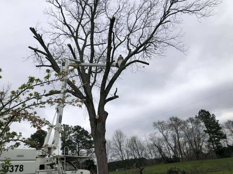 Radford Tree Service
