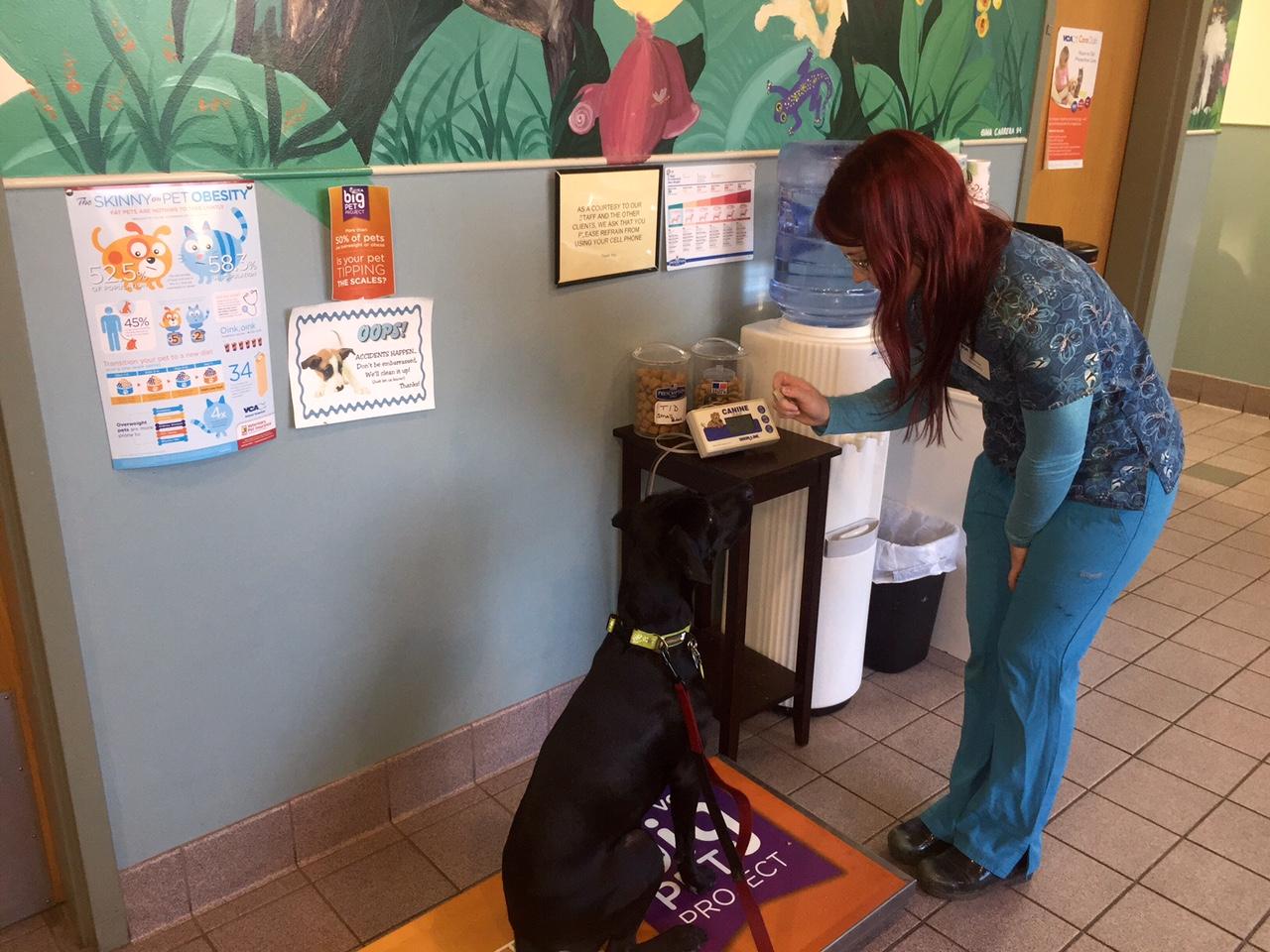 VCA Brown Animal Hospital image 9