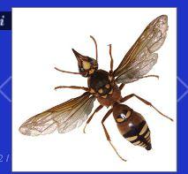 Eastern Termite & Pest Control image 3