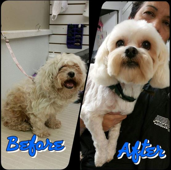 Paradise Pet Boarding & Grooming image 1