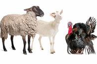 Livestock Sitter