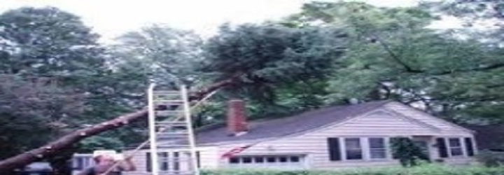 Cherokee Tree Service Of New Jersey image 5