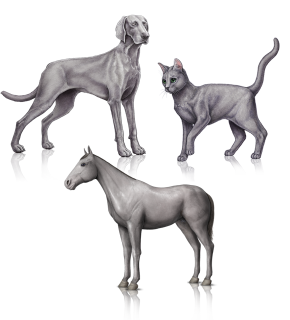 Parker Way Veterinary Clinic image 3