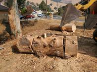 Tree service in San Jose, CA.