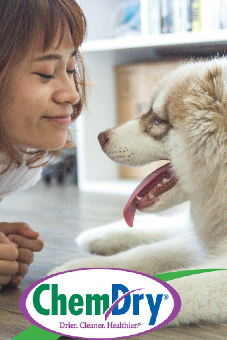 We love our pets and we know you do, too! After a pet accident, urine dries, the liquid evaporates but the urine crystals become even more concentrated and pungent. We eliminate the odor at the source, by exploding the urine crystals that cause the odors, so the smell is gone for good. This specialty process is called P.U.R.T (Pet Urine and Odor Removal Treatment). Call to schedule a P.U.R.T service today.