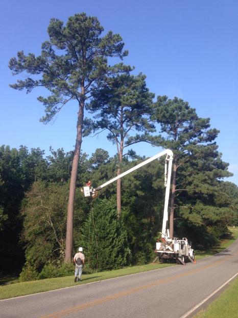 Allen's Tree Service image 4