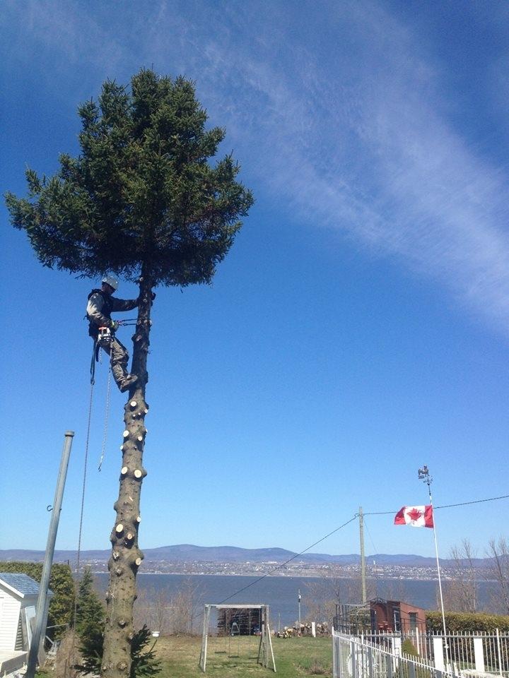 Arboriculture Thibault
