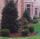 Round Hill Tree Service Inc image 1