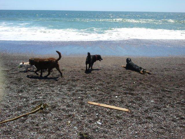 Fetch! Pet Care image 14