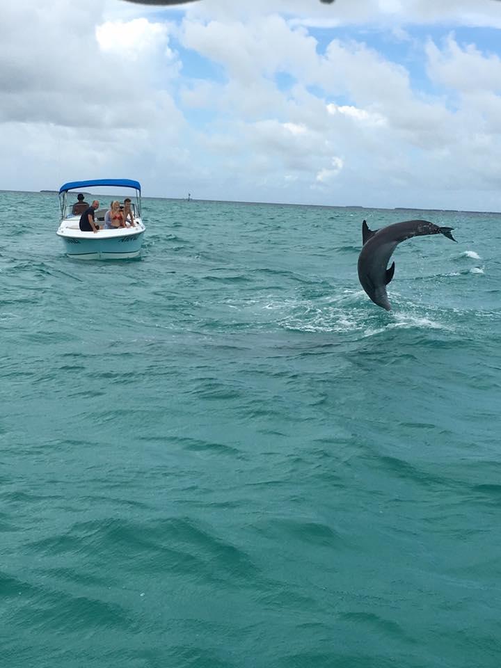 Dolphin Safari Charters Inc image 5