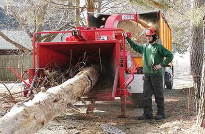 Ramirez Tree Service image 0