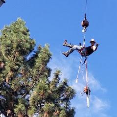 Central Oregon Tree Experts image 11