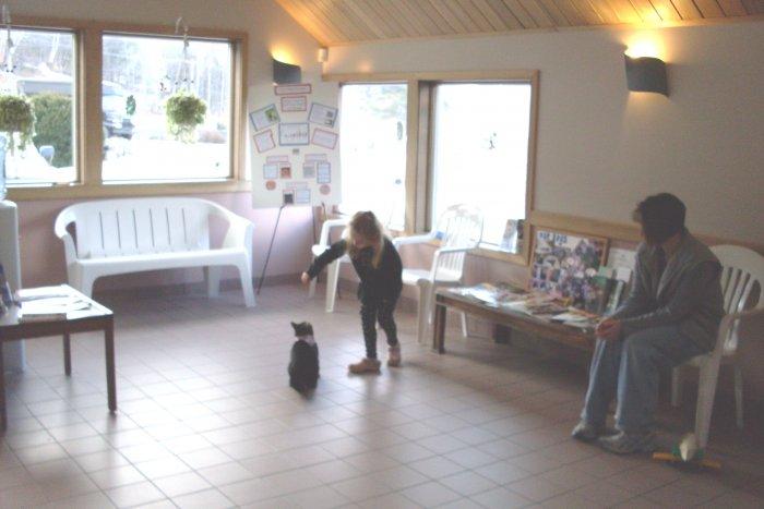 VCA Laconia Animal Hospital image 4