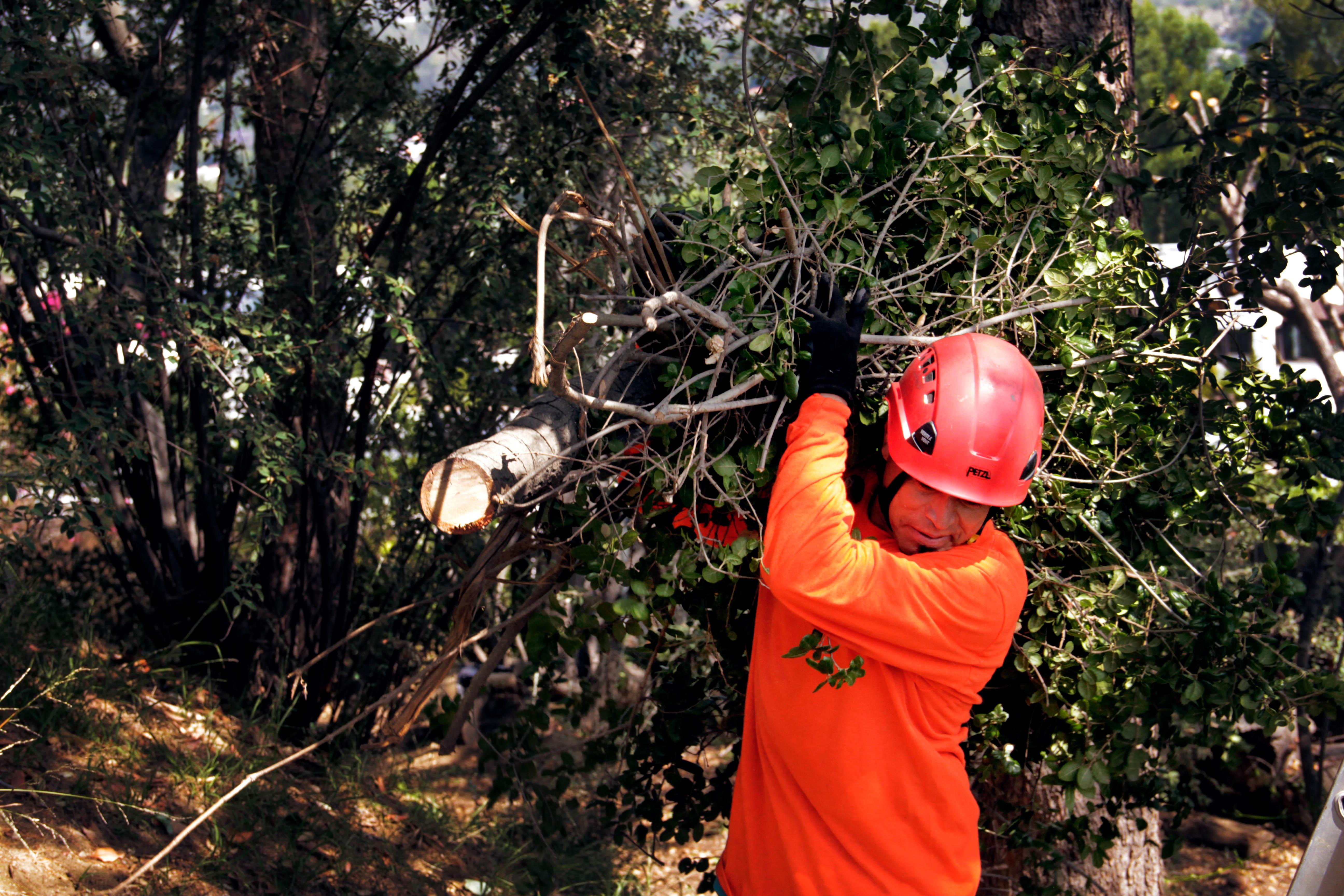 Flintridge Tree Care image 3