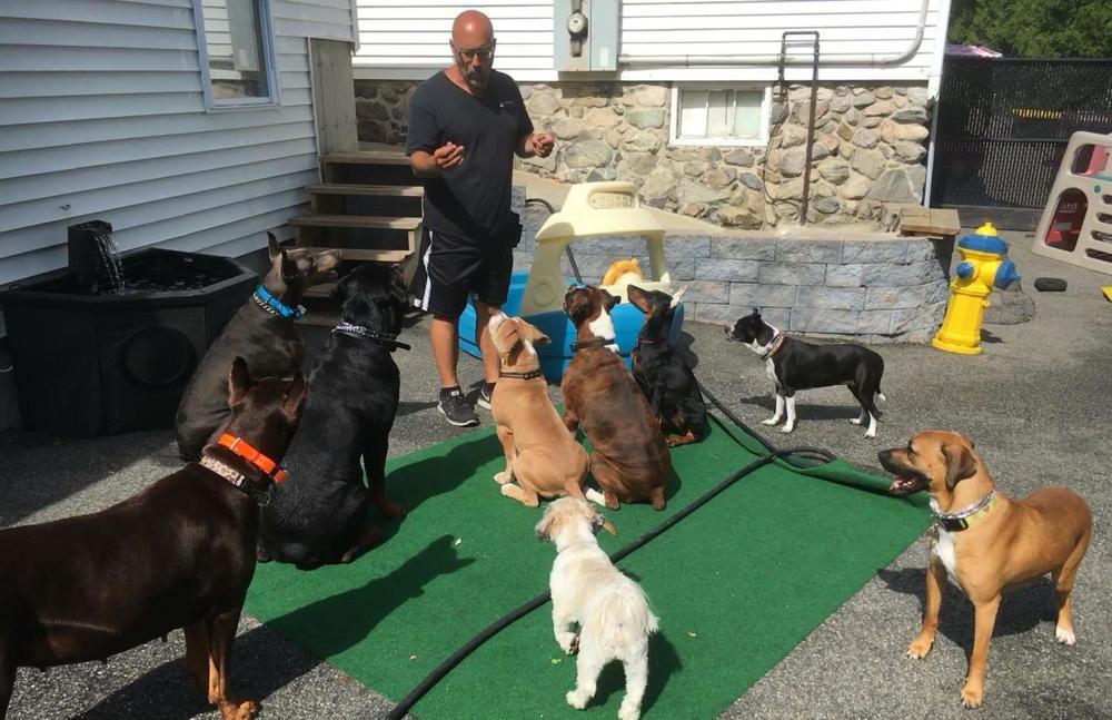 New England Canine image 7