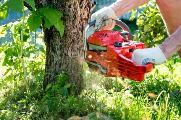 Big Bend Tree Service image 4