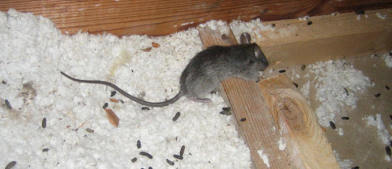 Universal Pest & Termite image 0