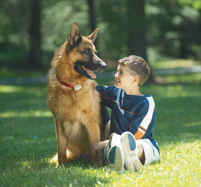 Friendly Pet Boundaries image 2