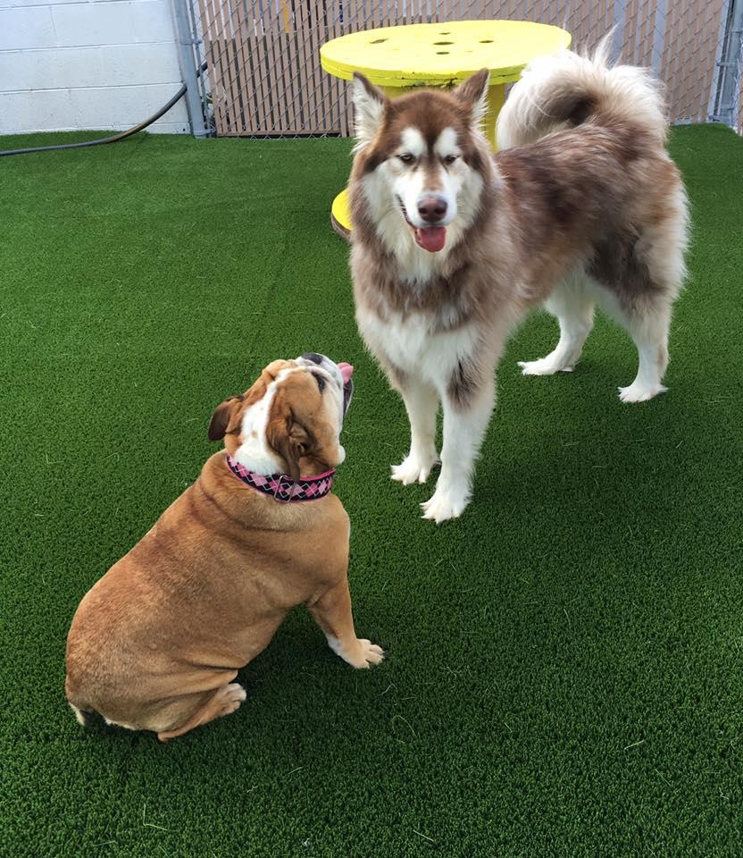 Jagger's Doggie Daycare, Dog Grooming, Training & Boarding image 6