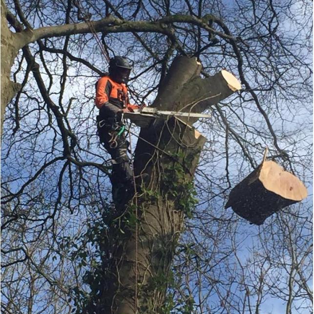 Christy's Tree Service