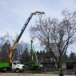 Russ's Tree Service image 6