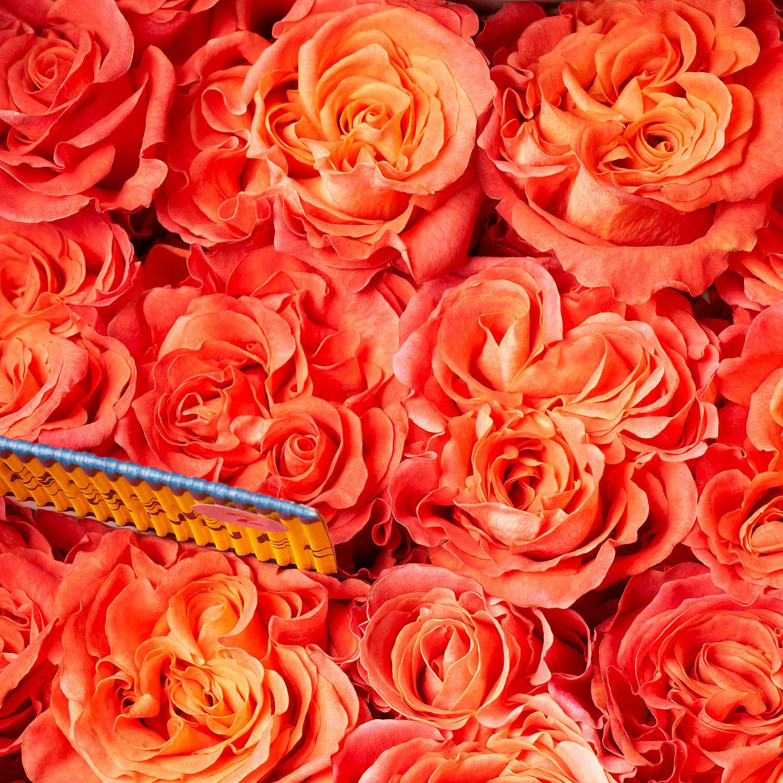 FMI Farms Flower Wholesale image 2