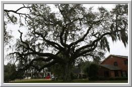 Hamilton Tree Service image 2