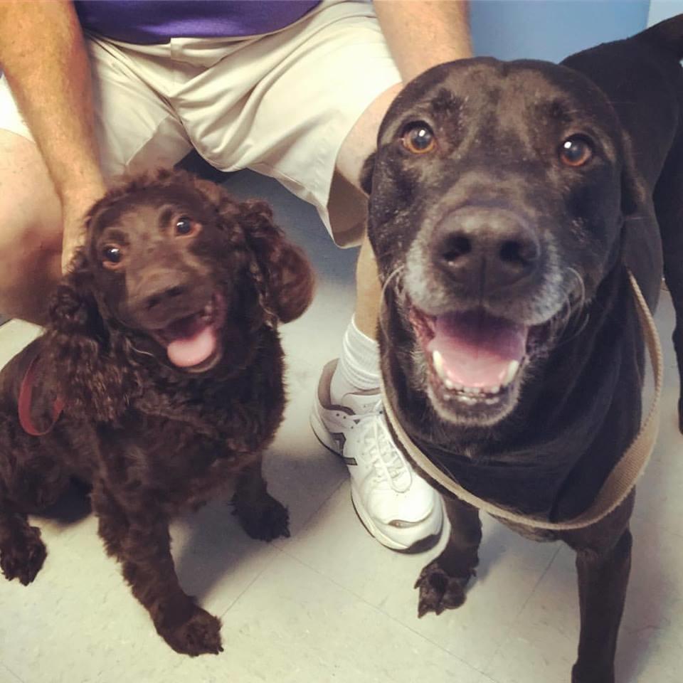 Houston Veterinary Clinic image 24