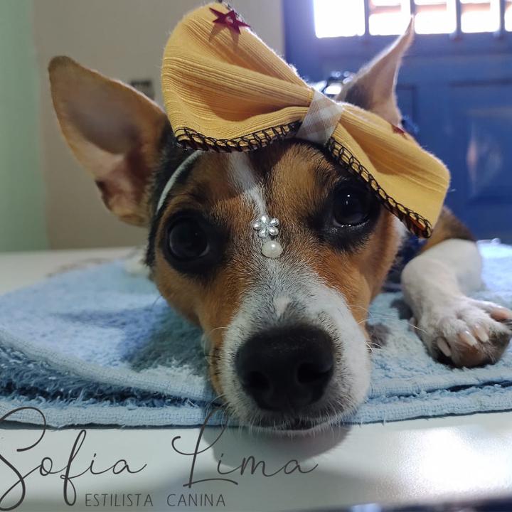 Peluquería y Spa Puppy Love