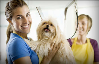 A Care Animal Clinic image 0