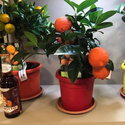 Vivai squadrito vivai piante articoli da giardino al for Piante da frutto nord italia