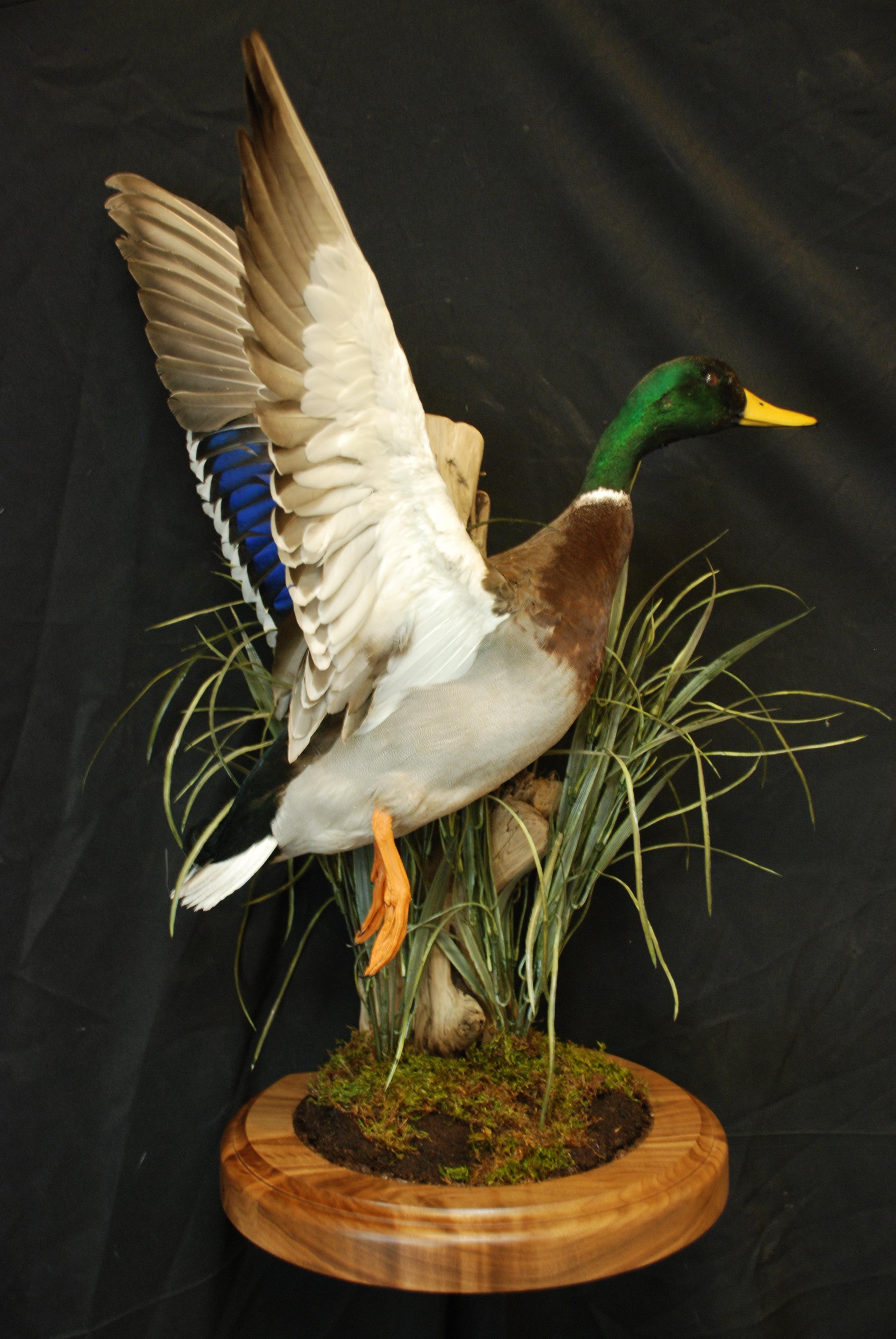 Wildlife Creations Taxidermy image 3
