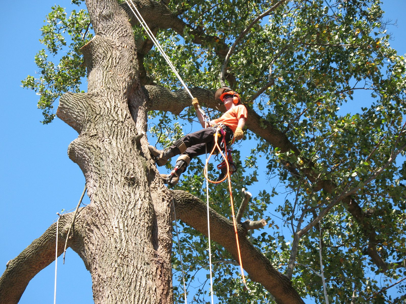 Troyer Tree Service image 5
