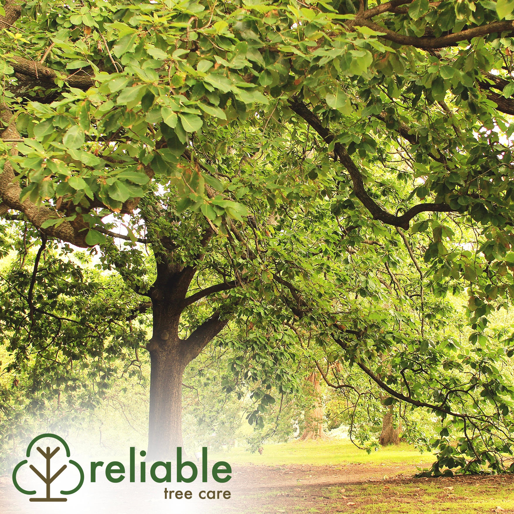 Reliable Tree Care and Removal image 3