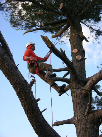 Houston Tree Service image 1