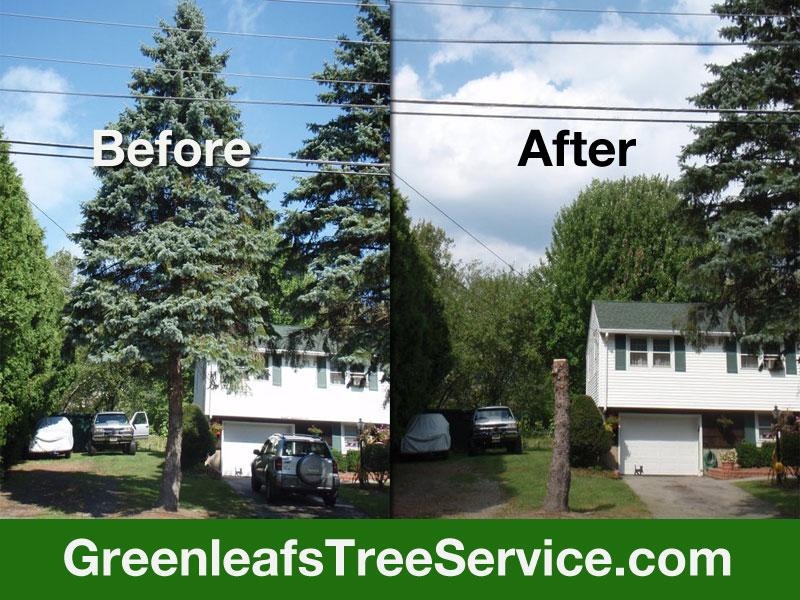Greenleaf's Tree Service image 15