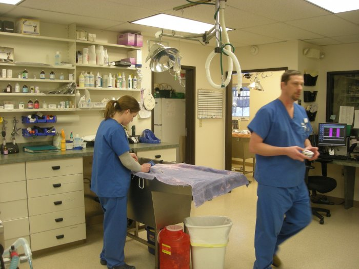 VCA Eagle River Animal Hospital image 2