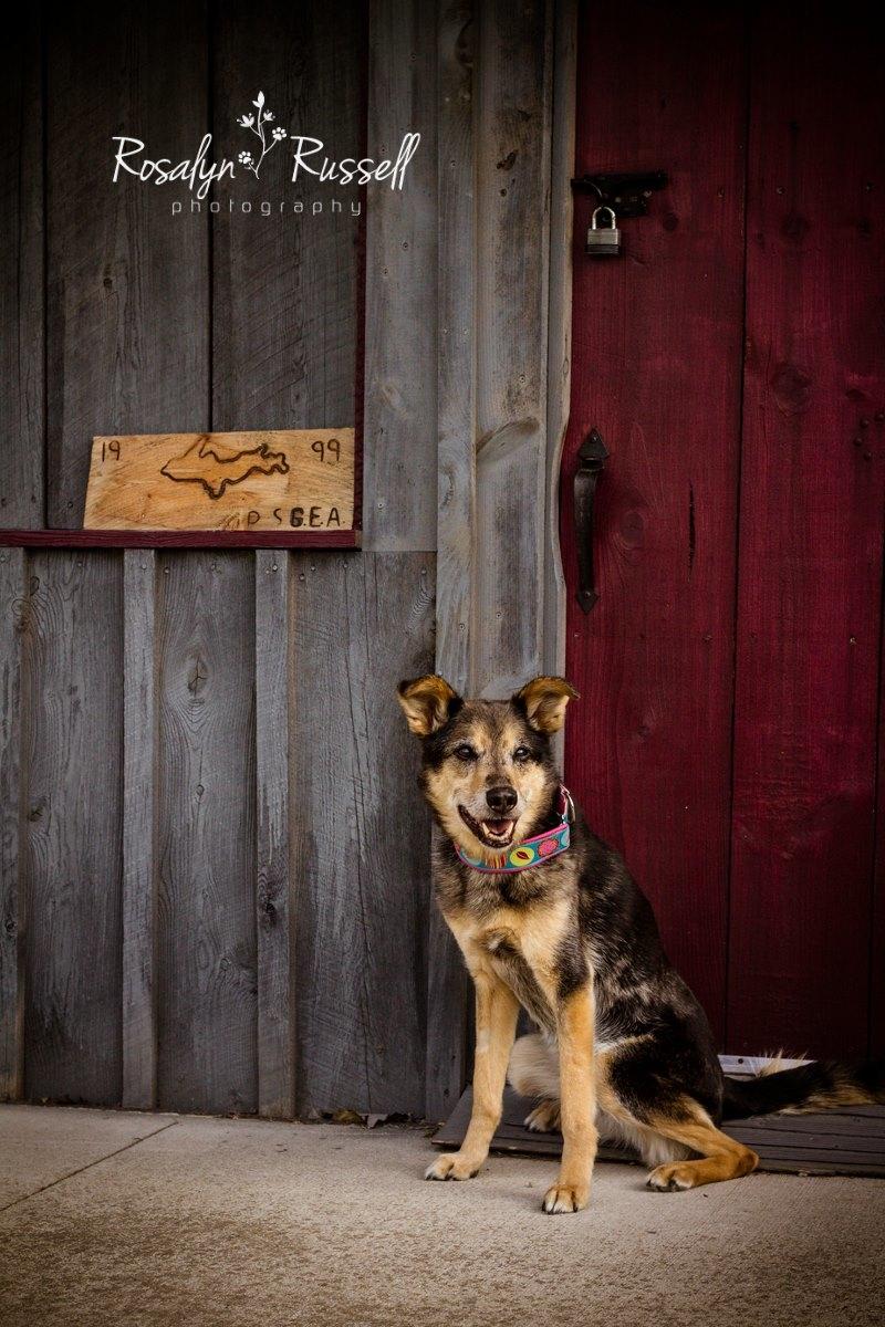 Prodigy Pups Dog Training LLC image 1