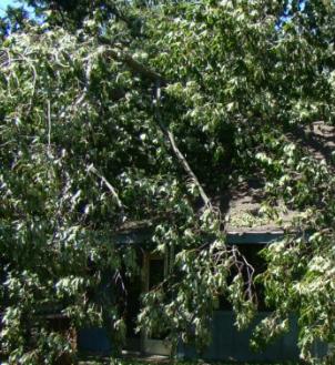 Jeff's Tree Service image 6