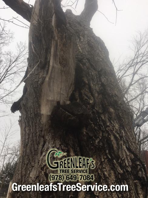 Greenleaf's Tree Service image 26