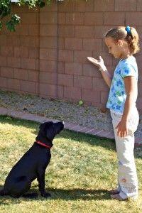 Home Dog Training Positively image 1