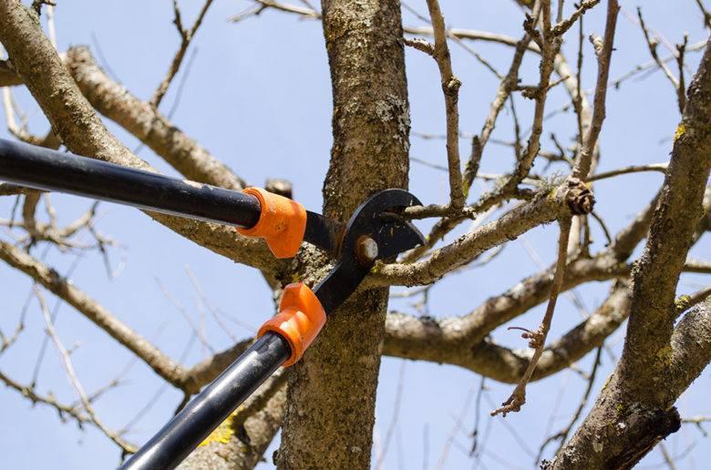Elliott's Tree Service, LLC image 2