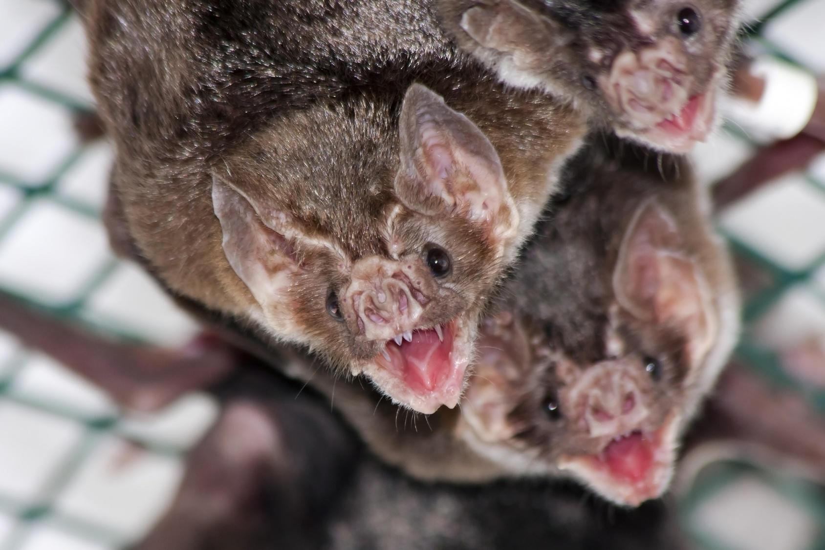 Verminator Pest Control LLC image 2