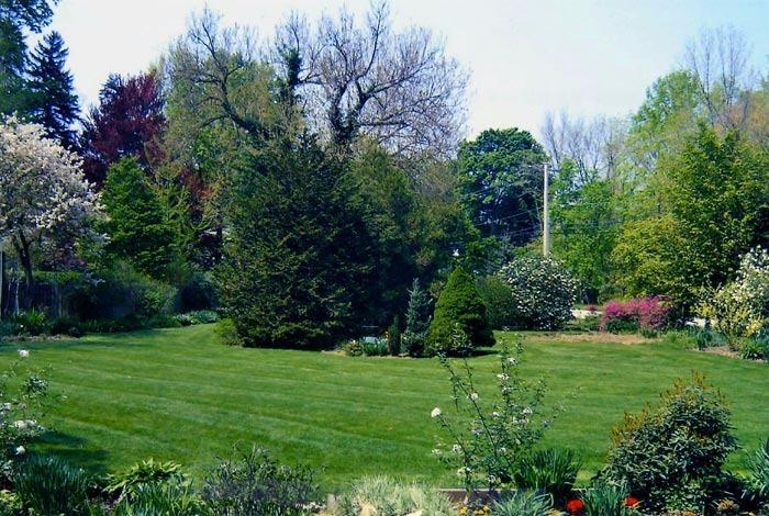 Zavala's Tree Service and Landscaping image 1