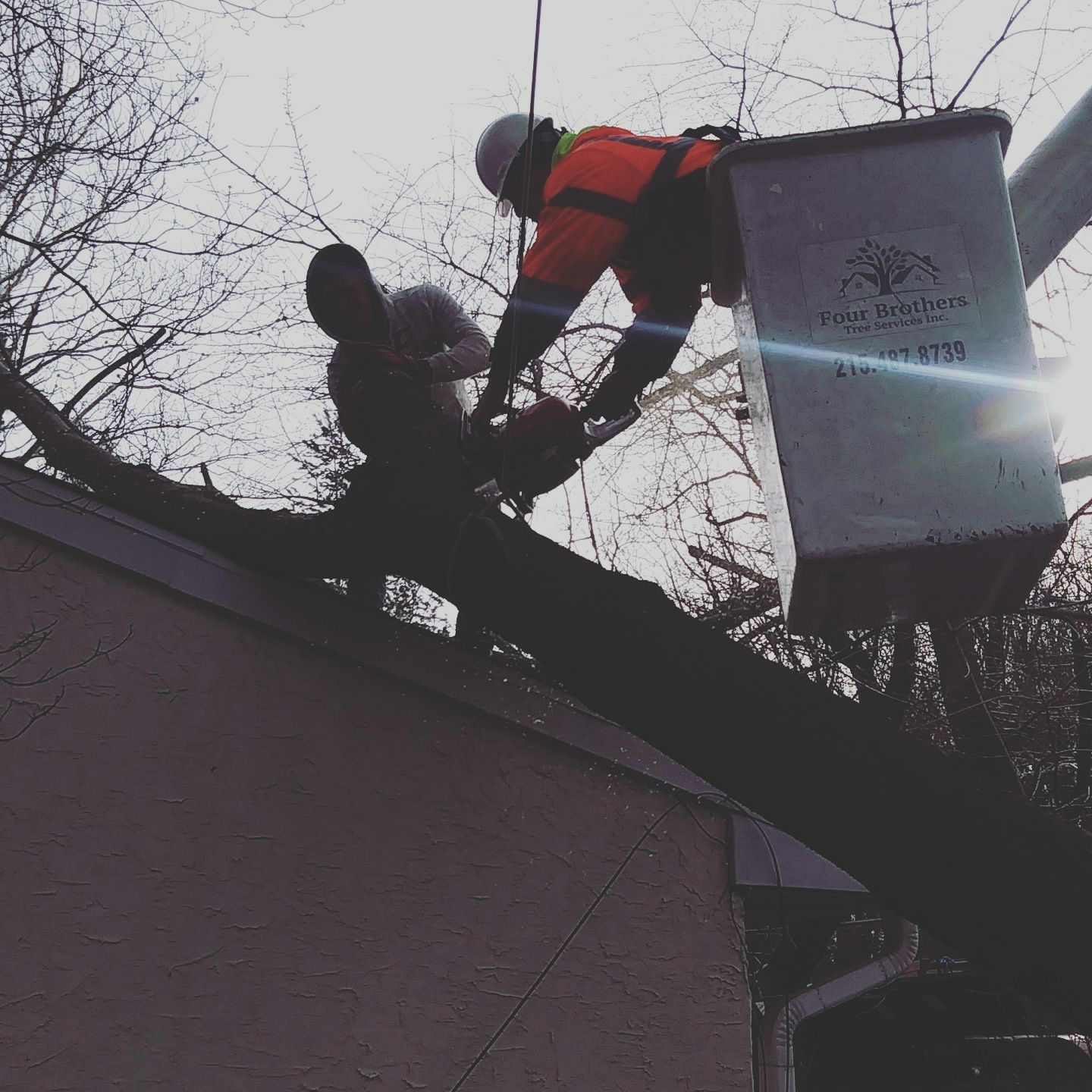 Four Brothers Tree Service Inc. image 2