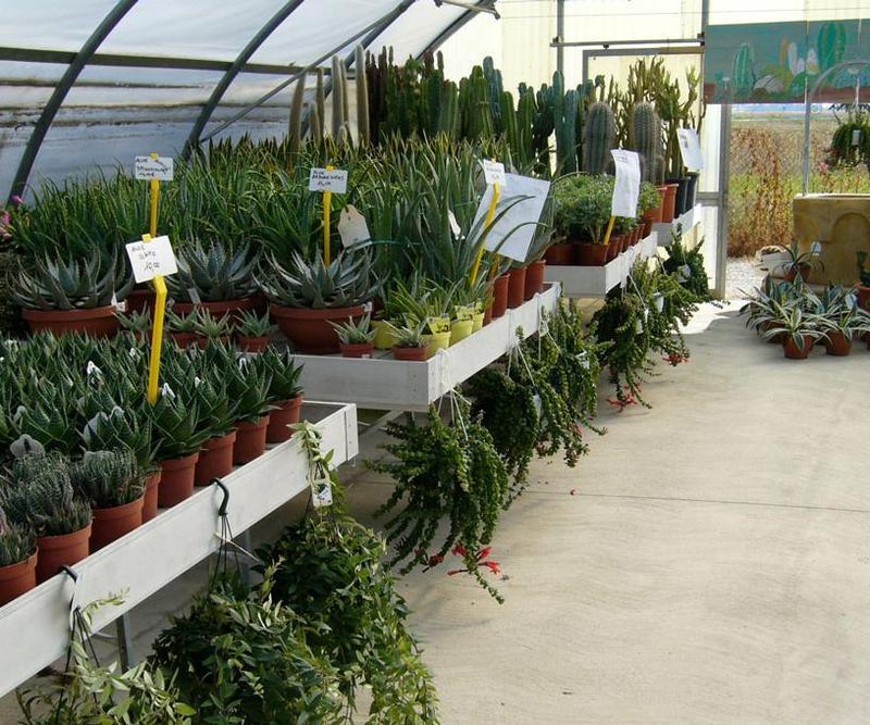 Vivaio boccacci vivai piante articoli da giardino al for Piante da vivaio