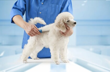 Bark N Bubbles Mobile Dog Grooming Salon