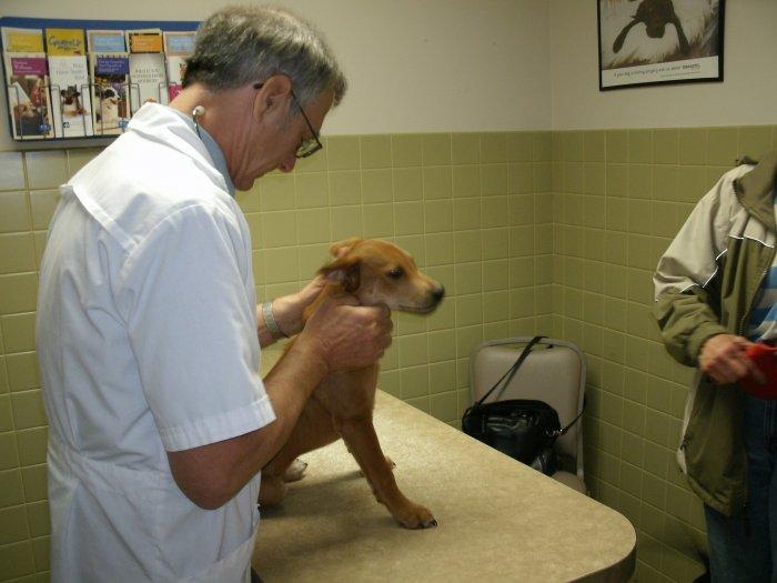 VCA Joliet Animal Hospital image 2